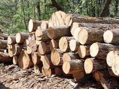 Timber Raw Materials